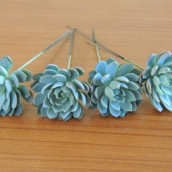 Collection of 5 one-inch succulents for hair dressing