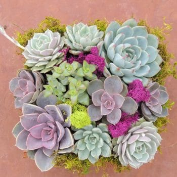 Summer-Wood box succulent arrangement Alexander Dawson School