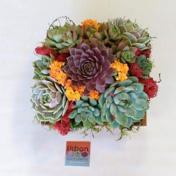 Summer-Wood box succulent arrangement