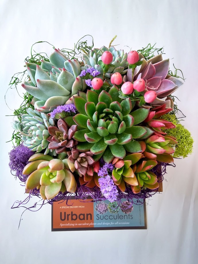 Colorful succulent arrangement with perle von nurnberg, sedums and embellished with reindeer moss.
