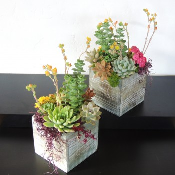 Succulent-Pair