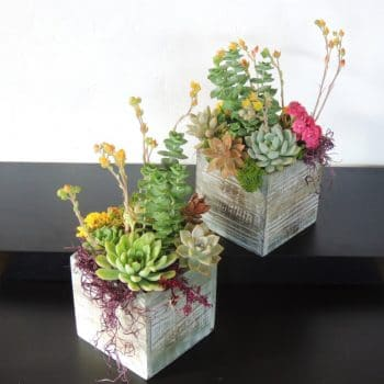 "Set of 2 Wood Box Succulent Arrangements - 5"" x 5"""