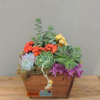 Wood box succulent arrangement -Ashley