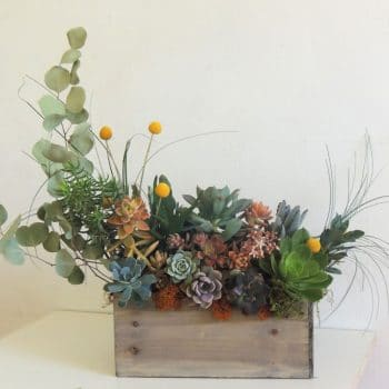 Succulent Table top Arrangement