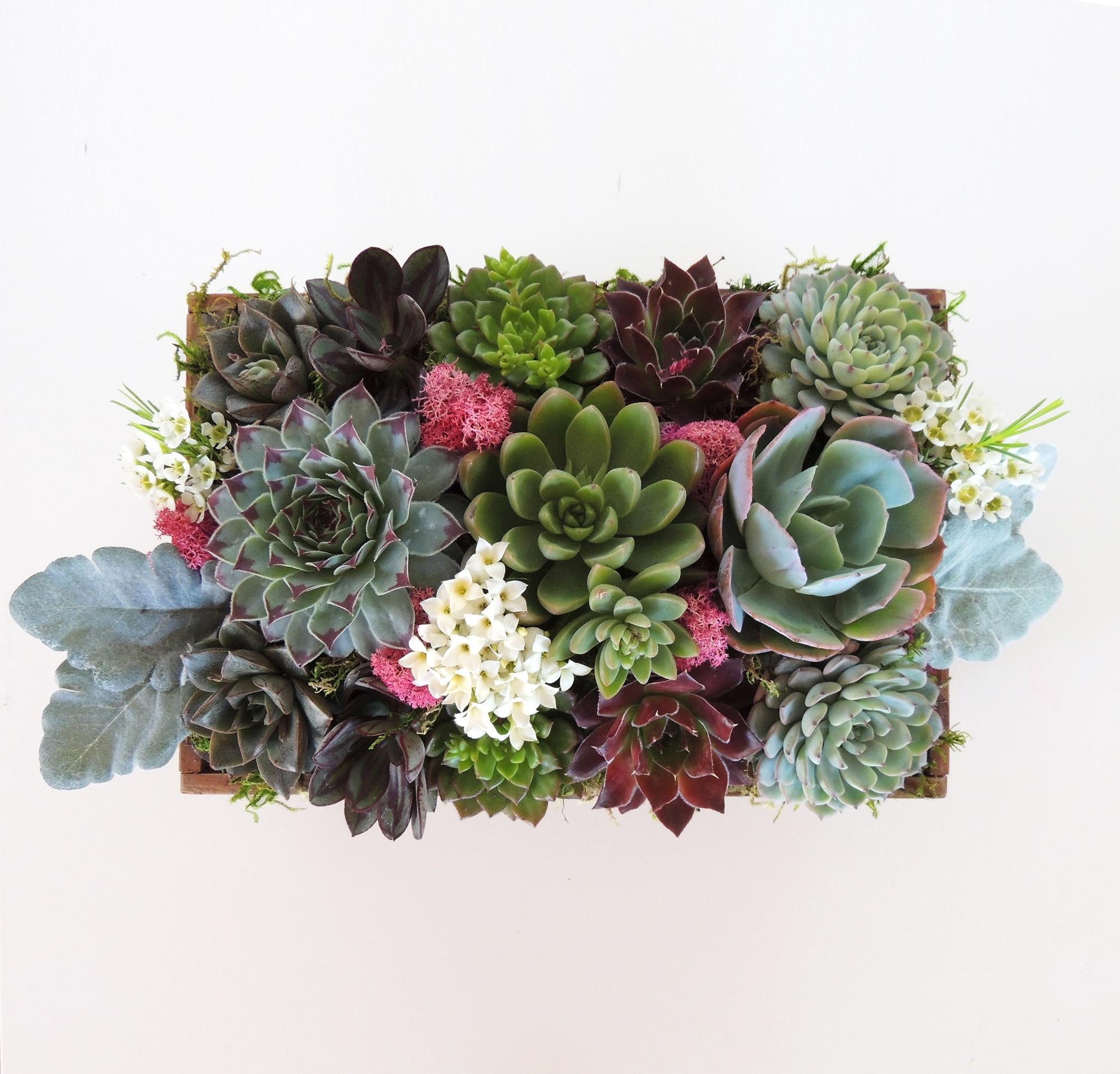 Colorful Large Succulent Arrangement With Sempervivum