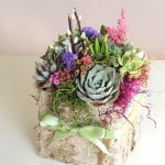 succulent arrangement in birch bark box