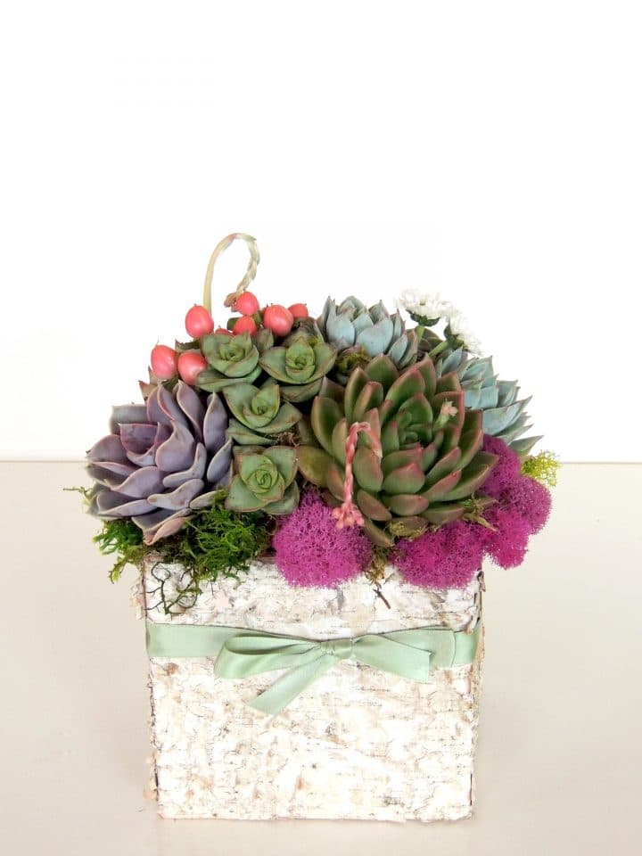 Candice succulent arrangement in birch box