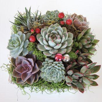 Summer-Wood box Succulent Arrangement