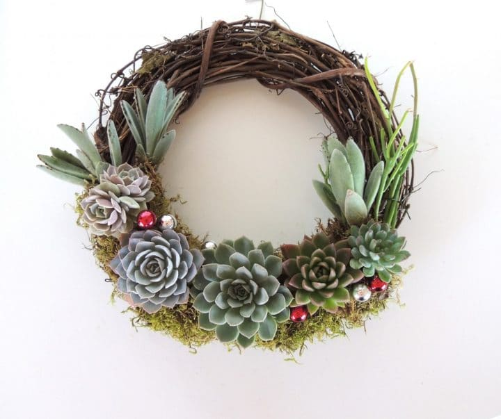 Succulent Christmas wreath