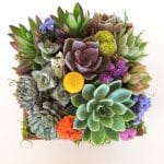succulent arrangement in 7 x 7 wood box