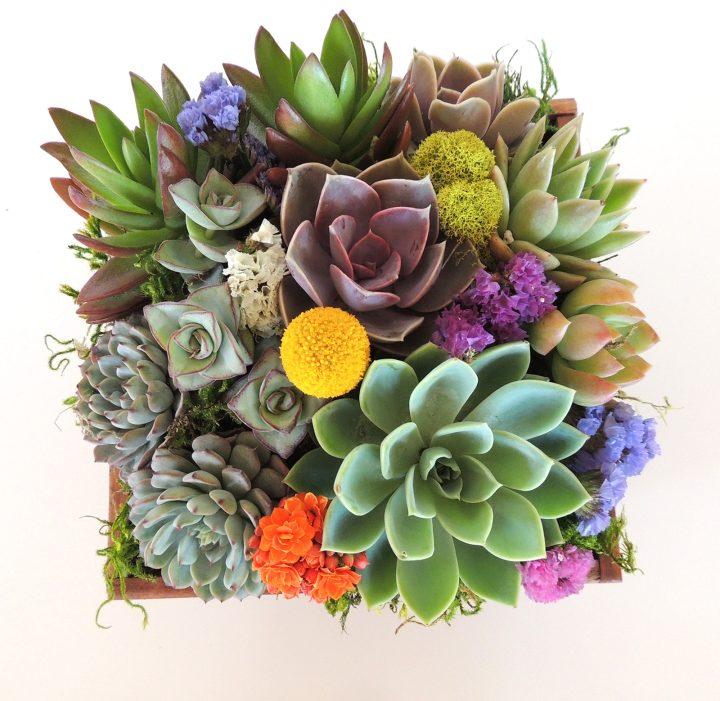 succulent arrangement in 7 x 7 wood box
