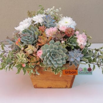 Wood box succulent arrangement -Ashley (San Diego delivery only)