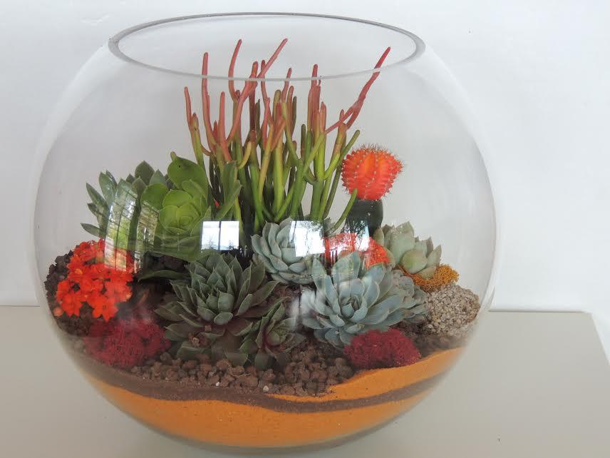 Bubble Succulent Terrarium-Large   Urban Succulents