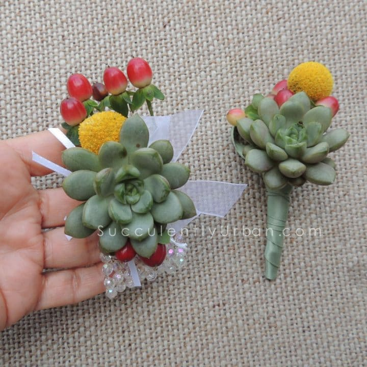 succulent boutonniere and corsage