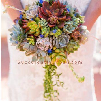 Succulent Bouquet- Cascading Bouquet -Hillary