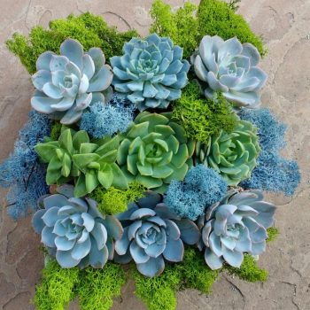 Succulent Arrangements Sysco