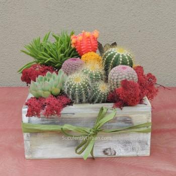 Cactus-Arrangement_016-b