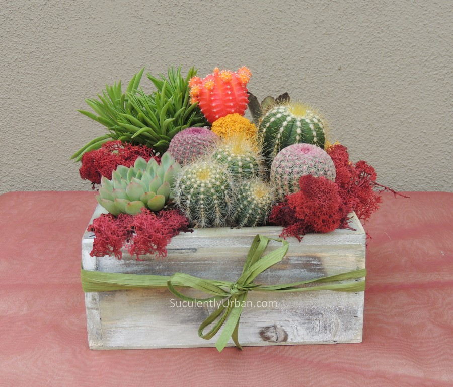 Succulent Gift Arrangement in Wooden Box