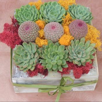 CactusArrangement 019