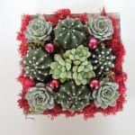 Cactus and echeveria arrangement- Christmas gift.