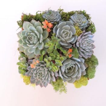 Green -Gift Succulent Arrangement in Wood Container