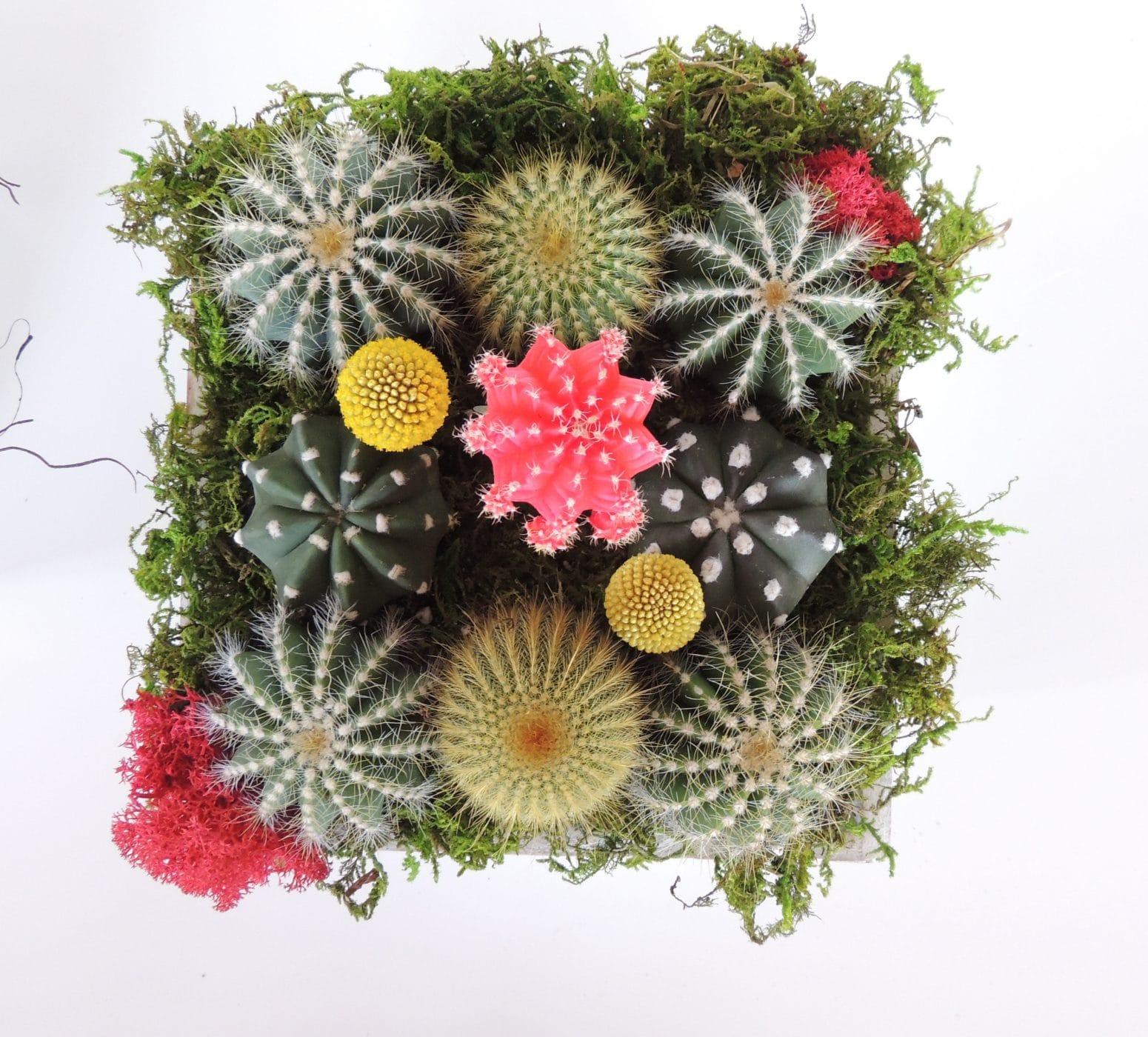 Cactus Gift Arrangement In Wooden Box