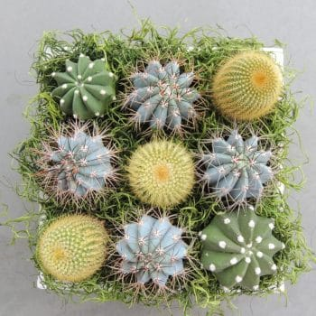 Cactus Arrangement - Includes Shipping