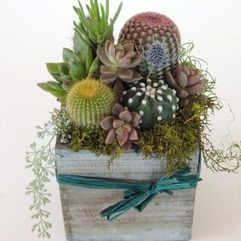 "Cacti Arrangement with Succulents in a 5"" x 5"" wood box"