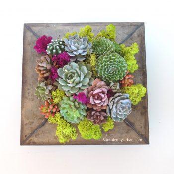 Succulent-arrangement-0775