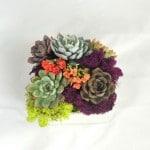 Succulent-arrangement- in-ceramic-dish_0117