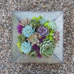 Succulent-arrangement_3375
