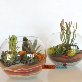 "Succulent Terrarium 8"" (San Diego Only)"