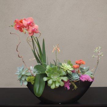 Succulent-Orchid