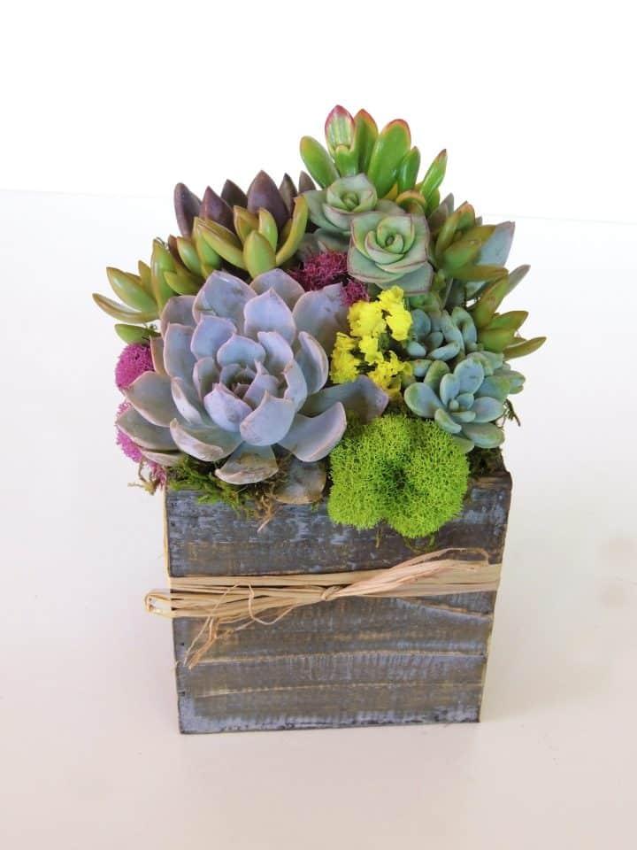 succulent-arrangement-5x5