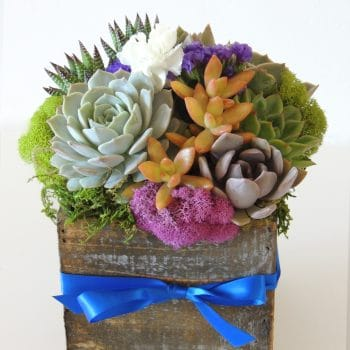 "Succulent Arrangements- 5"" x 5"" Wood Container"