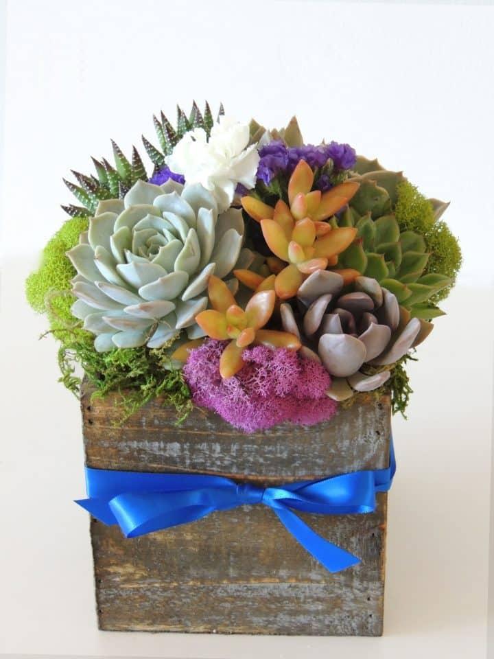 Succulent Arrangement with blue ribbon