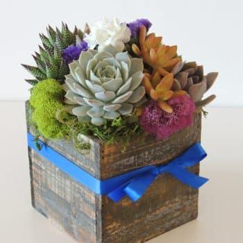 succulent arrangement in 5x5 wood box-Tara