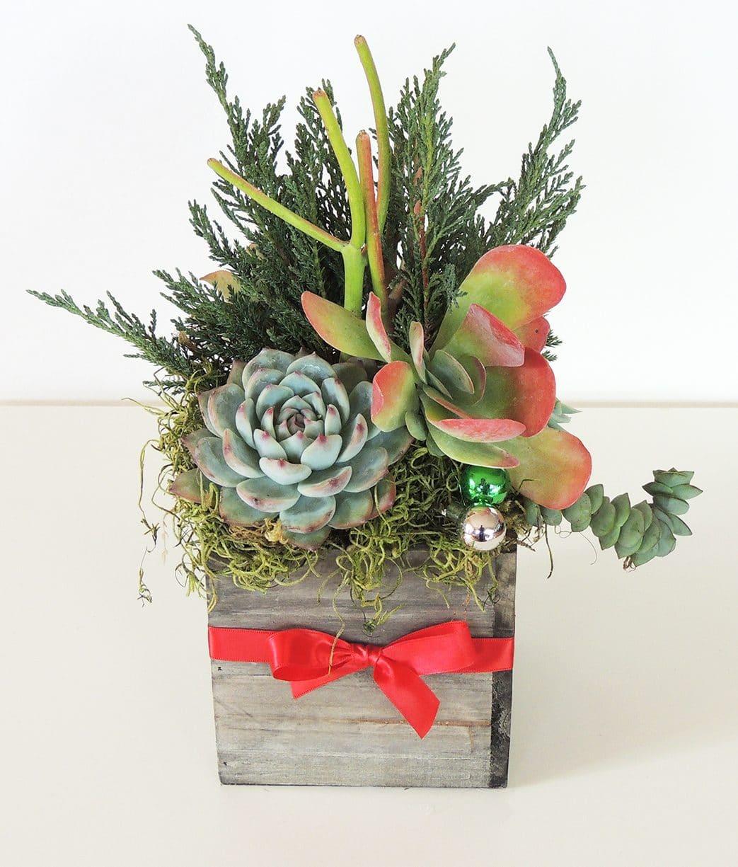 Christmas Succulent Gift.Succulent Arrangements 5 X 5 Wood Container