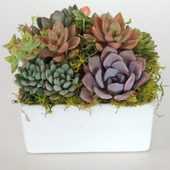 succulent-arrangement_3622