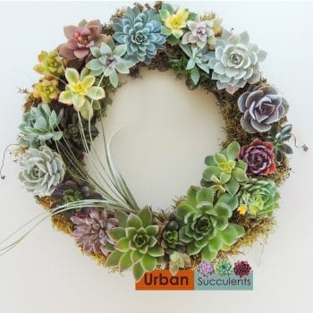 succulent-wreath-3656A