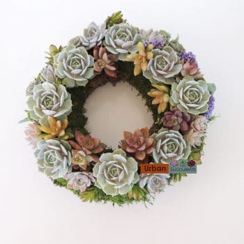 Succulent Spring Wreath - Includes Shipping