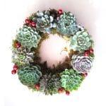 Succulent Xmas Succulent wreath