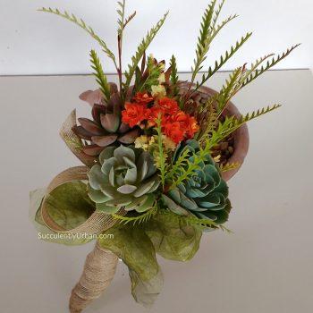 succulents-leucadendron_1b-small