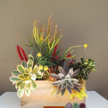 Succulent Arrangement Wood Box