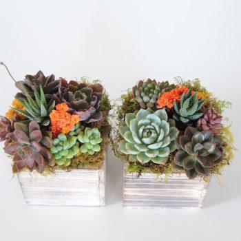 succulent-arrangement-4426