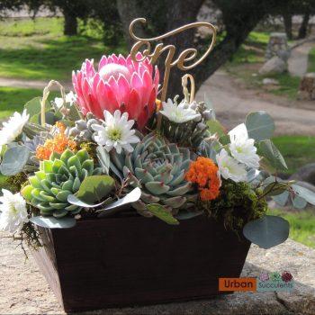 Succulent/Protea Arrangement (San Diego Only)