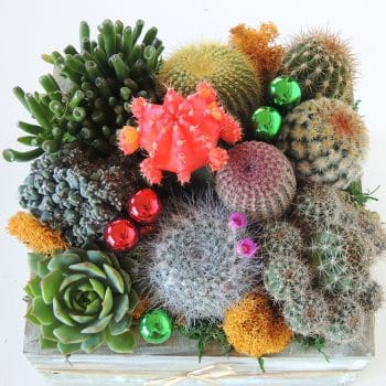 Cactus Garden, Green Gift - Includes Shipping