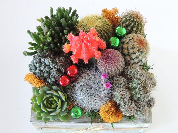 Cactus arrangement. Succulent gift.