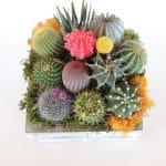 Cactus arrangement, green gift.