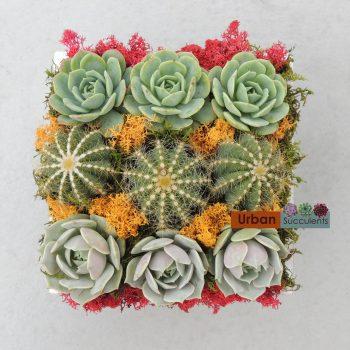 cactus-arrangement-5173b
